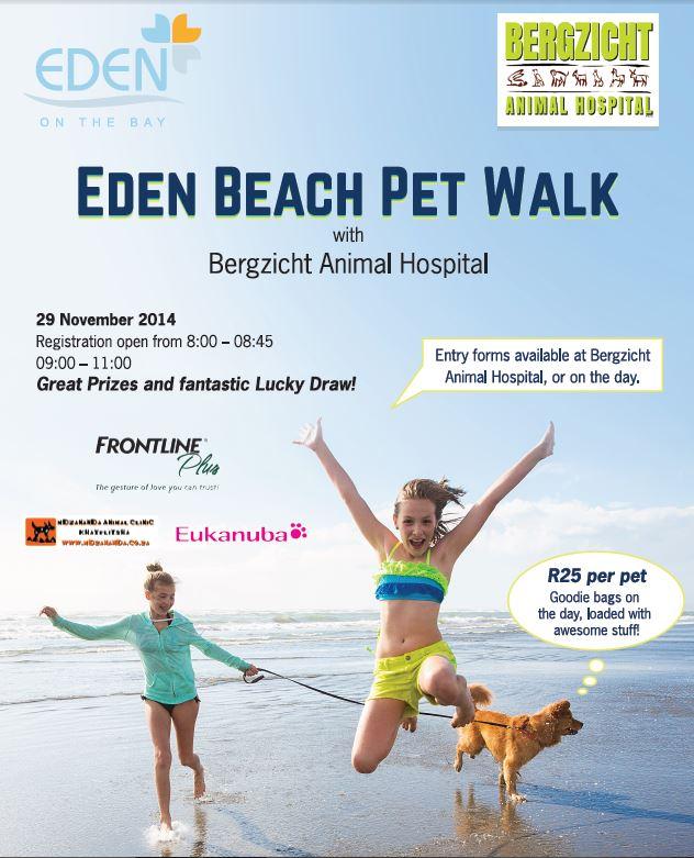 beach pet walk